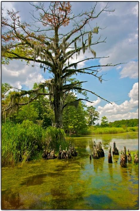 NC_wetlands