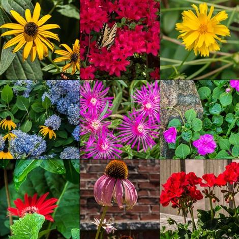 flowers_comp